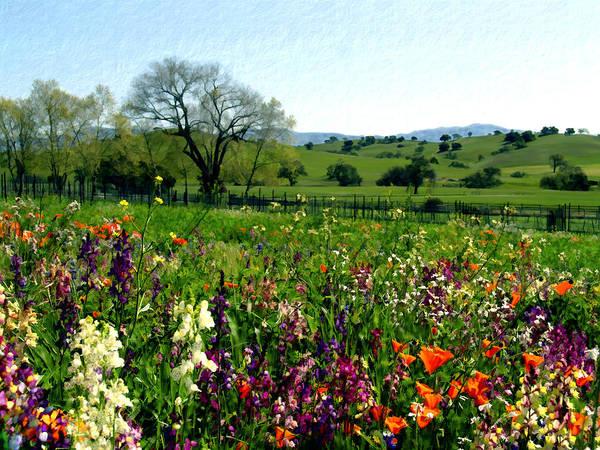 Photograph - Spring Bouquet At Rusack Vineyards by Kurt Van Wagner