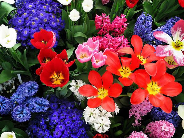 Photograph - Spring Bouquet by Sandy Scharmer