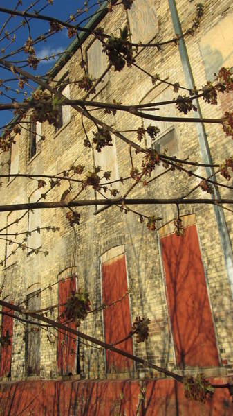 Photograph - Spring Buds And Urban Decay 2 by Anita Burgermeister