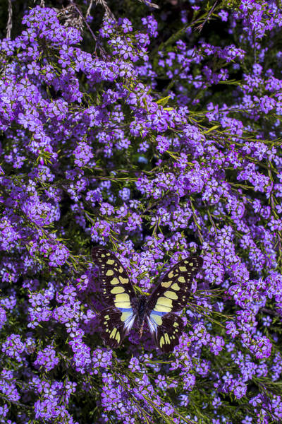 Butterfly Bush Wall Art - Photograph - Spring Butterfly by Garry Gay
