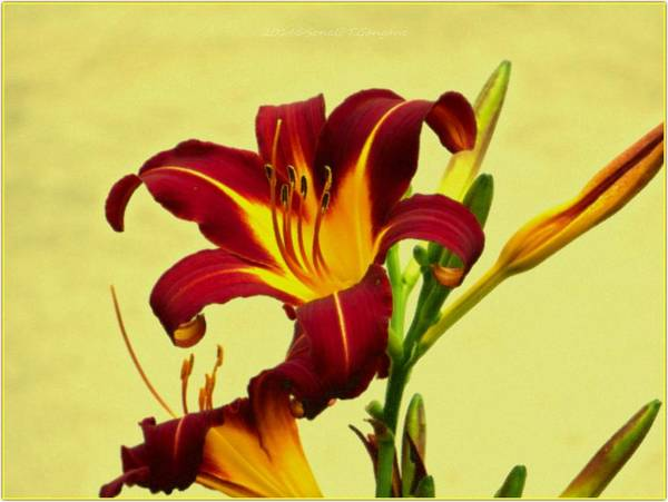 Greetingcards Photograph - Spring Candor by Sonali Gangane