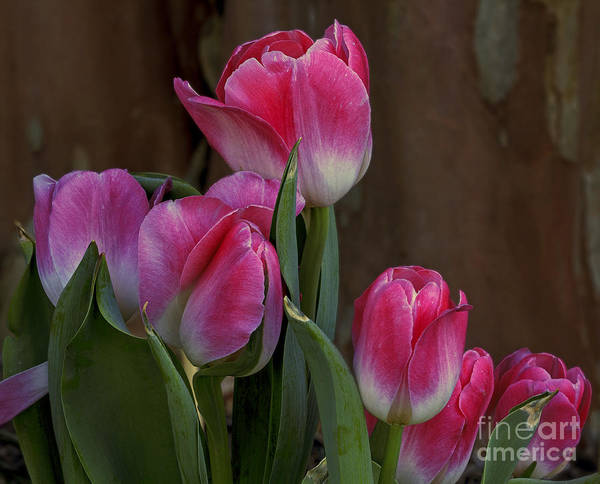 Lewes Photograph - Spring Color by Robert Pilkington