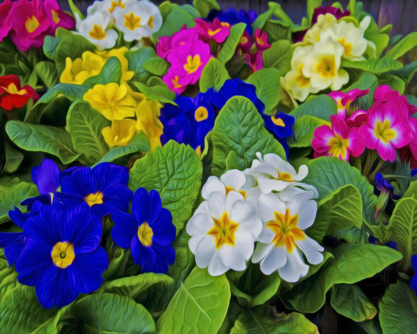 Wall Art - Photograph - Spring Colors by Dave Sandt