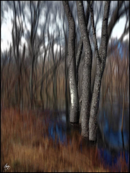 Photograph - Spring Colors In A Floodplain Forest by Wayne King