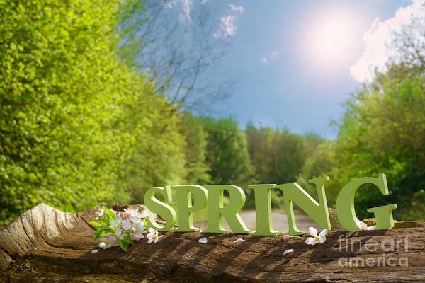 Logs Photograph - Spring Landscape by Amanda Elwell