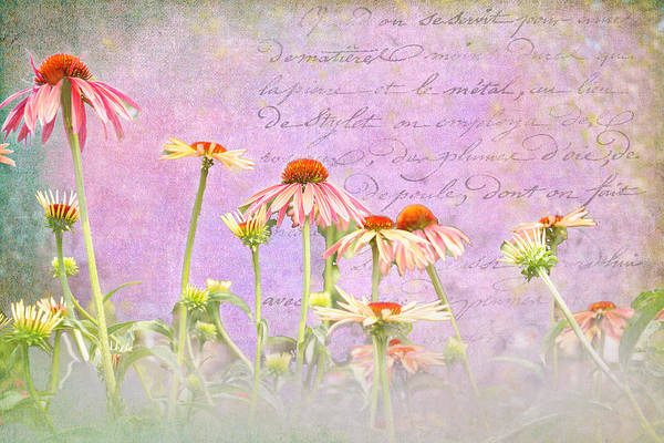 Photograph - Spring Coneflowers by Paulette B Wright