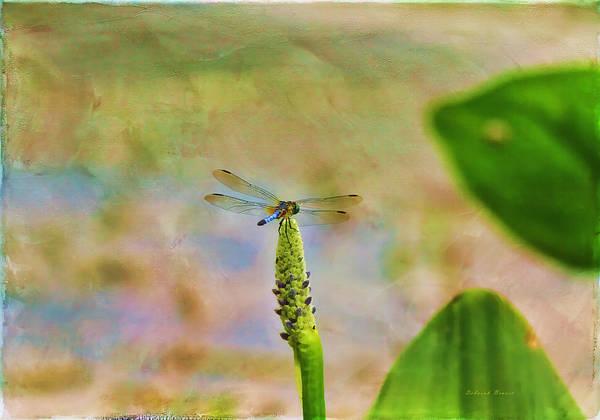 Photograph - Spring Damsel by Deborah Benoit