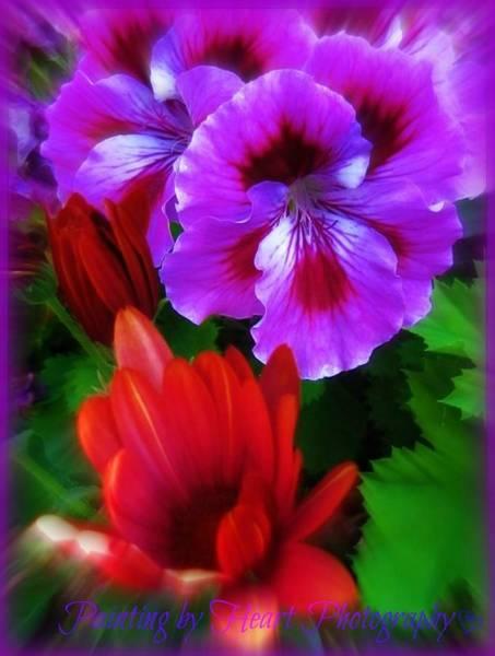 Photograph - Spring by Deahn      Benware