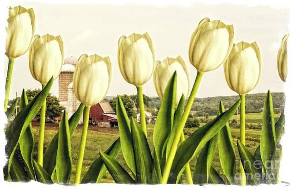 Family Farm Wall Art - Photograph - Spring Down On The Farm by Edward Fielding