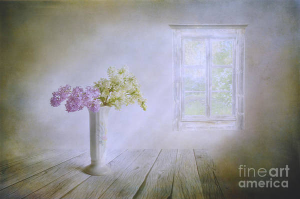 Salo Wall Art - Photograph - Spring Dream by Veikko Suikkanen