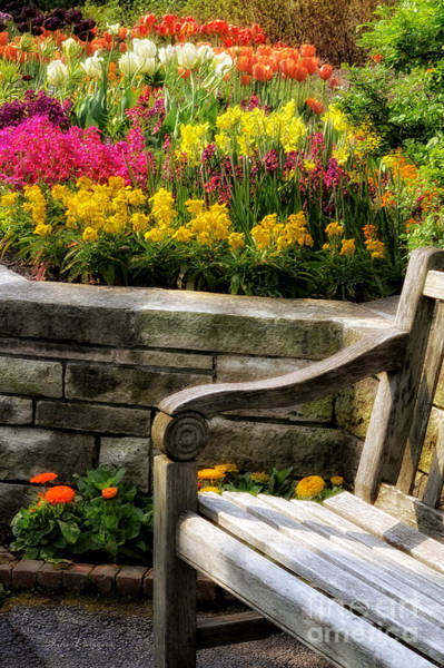 Photograph - Spring Flower Bed And Bench by Julie Palencia