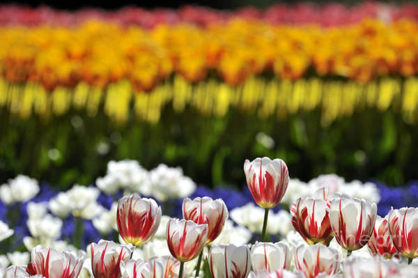 Photograph - Spring Flowers 11 by Arterra Picture Library