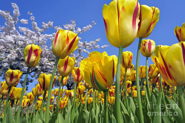 Photograph - Spring Flowers 12 by Arterra Picture Library