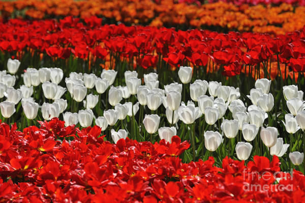 Photograph - Spring Flowers 16 by Arterra Picture Library