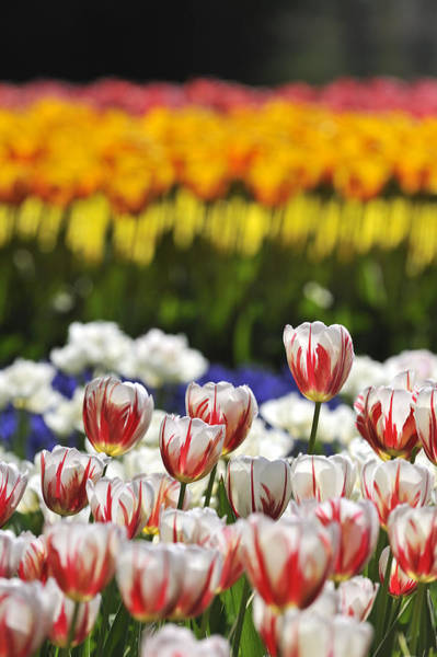 Photograph - Spring Flowers 2 by Arterra Picture Library