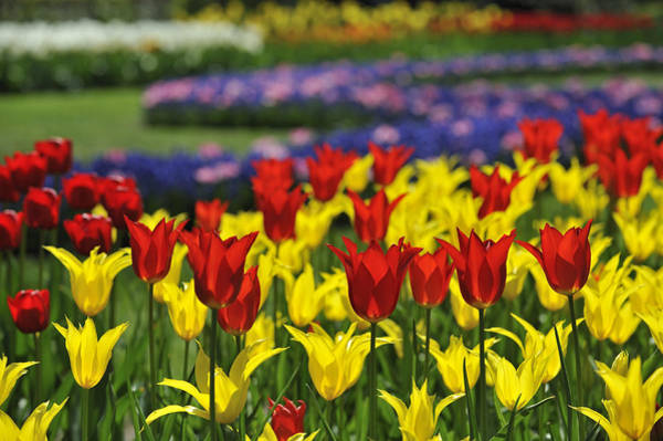 Photograph - Spring Flowers 4 by Arterra Picture Library