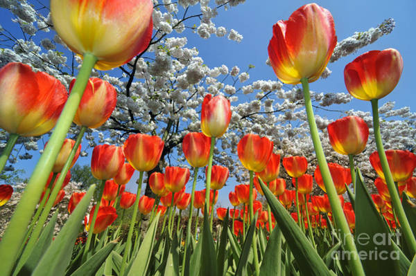 Photograph - Spring Flowers 7 by Arterra Picture Library