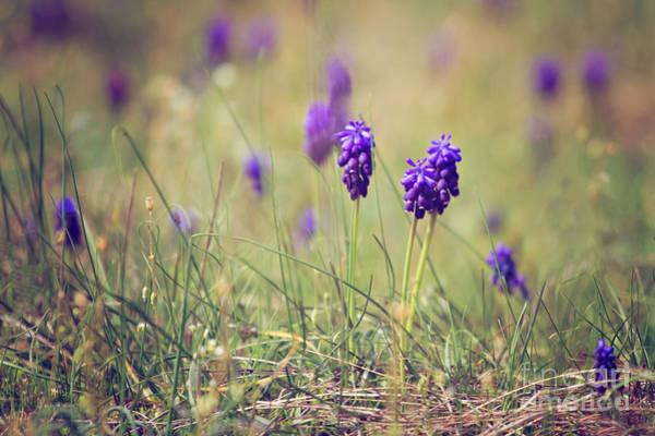Wall Art - Photograph - Spring Flowers by Diana Kraleva