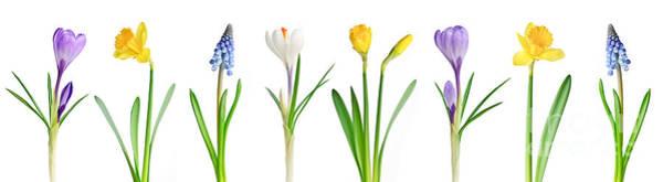 Wall Art - Photograph - Spring Flowers  by Elena Elisseeva