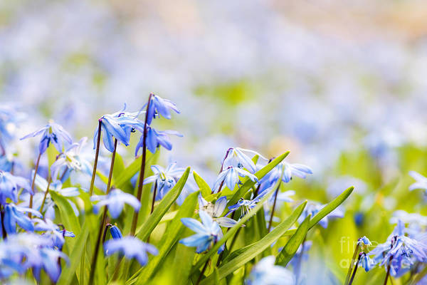 Photograph - Spring Flowers  by Elena Elisseeva