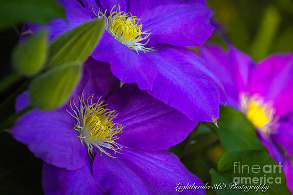 Photograph - Spring Flowers by Larry McMahon