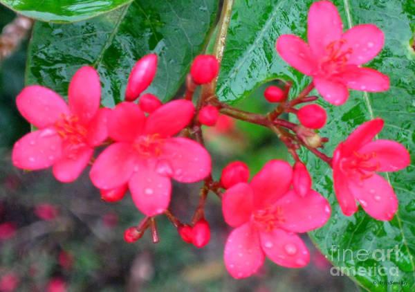 Photograph - Spring Flowers by Oksana Semenchenko