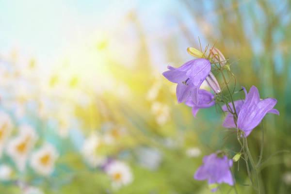 Ornamental Grass Photograph - Spring Flowers Sunlit by Pobytov