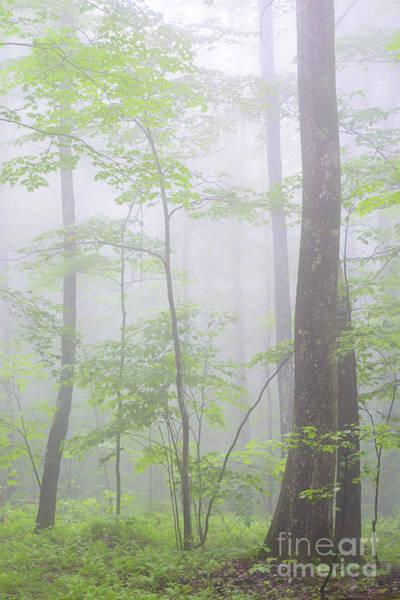 Photograph - Spring Fog Forest by Thomas R Fletcher