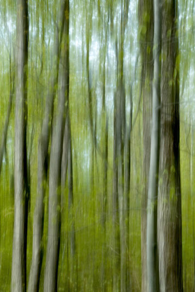 Photograph - Spring Forest Abstract by Rob Huntley