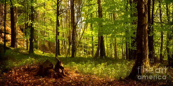Photograph - Spring Forest by Lutz Baar