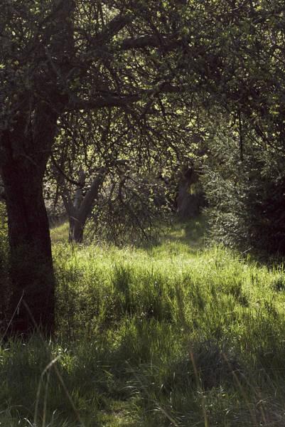 Photograph - Spring Forest by Yulia Kazansky