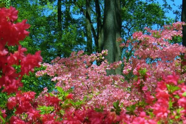Winterthur Wall Art - Photograph - Spring Garden Color by Jeanette Oberholtzer