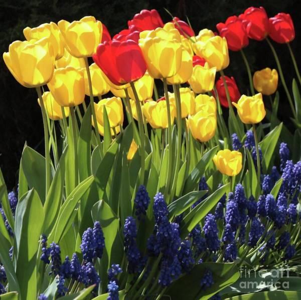 Photograph - Spring Garden Sunshine Square by Carol Groenen
