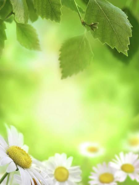Daisy Photograph - Spring Green Background by Pobytov