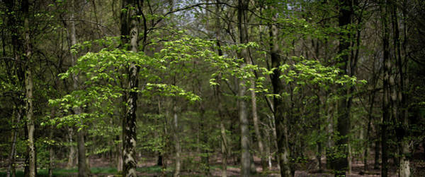 Photograph - Spring Greenery by Gary Eason