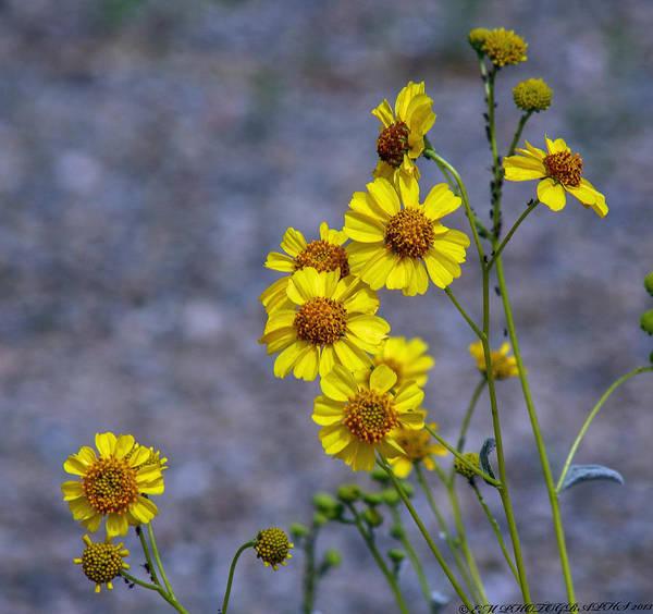 Photograph - Spring Has Sprung by Elaine Malott