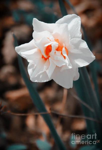 Photograph - Spring Has Sprung by Gerlinde Keating - Galleria GK Keating Associates Inc