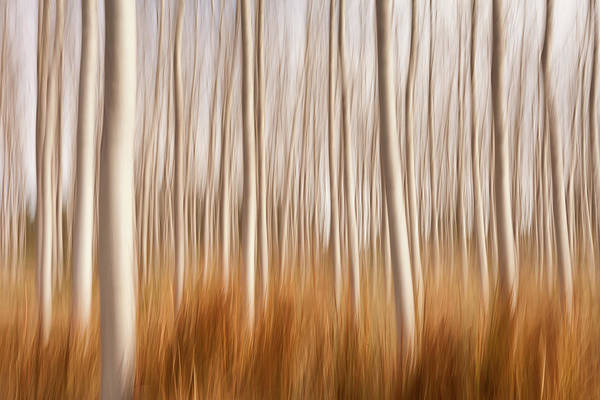 Wall Art - Photograph - Spring Impressions In A Poplar Fields by David Frutos