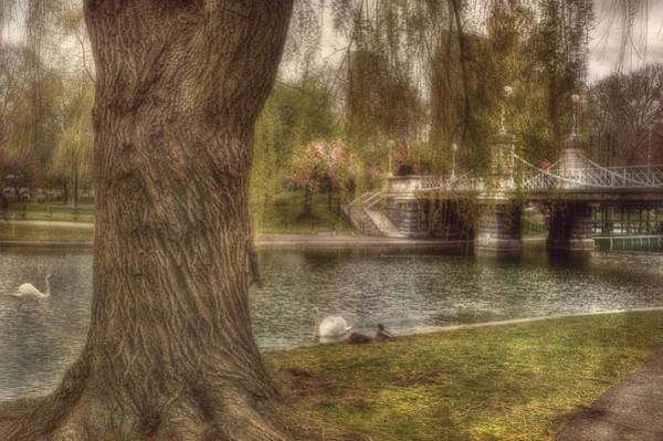 Photograph - Spring In Boston Public Garden by Joann Vitali