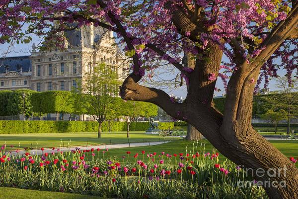 Jardin Des Tuileries Photograph - Spring In Paris by Brian Jannsen