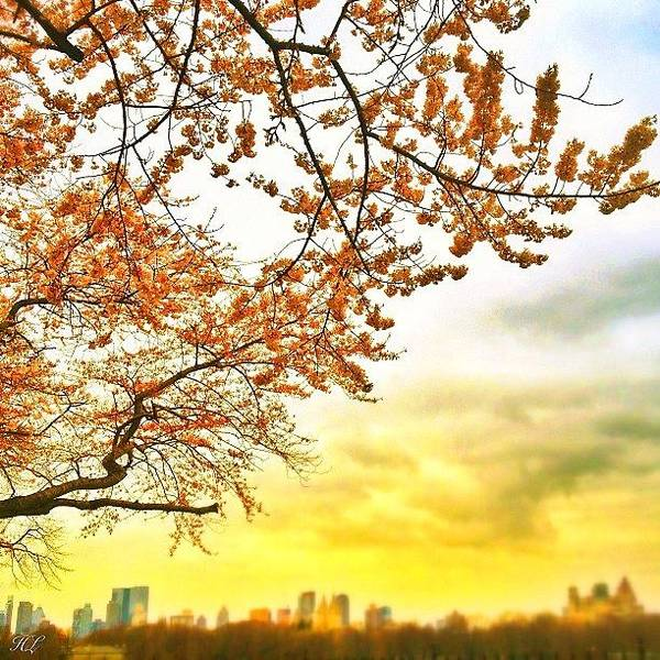 Gotham Wall Art - Photograph - Spring In The Air #centralpark #nyc by Hector Lopez ✨