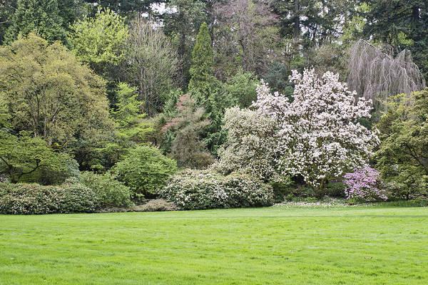 Photograph - Spring In The Garden by Priya Ghose
