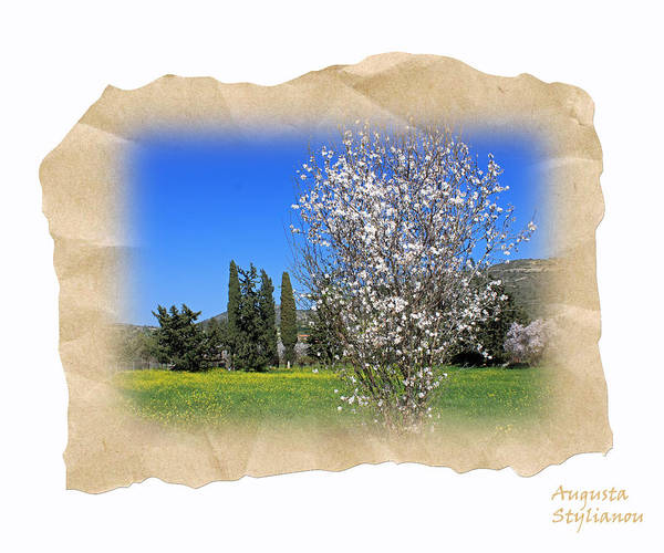 Photograph - Spring In The Paper by Augusta Stylianou