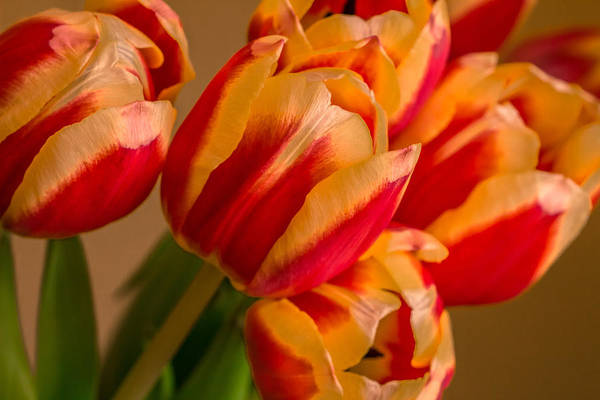 Photograph - Spring Indoors by Julie Andel