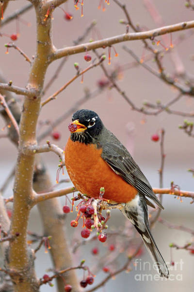 Ornithology Photograph - Spring Is Coming by Betty LaRue