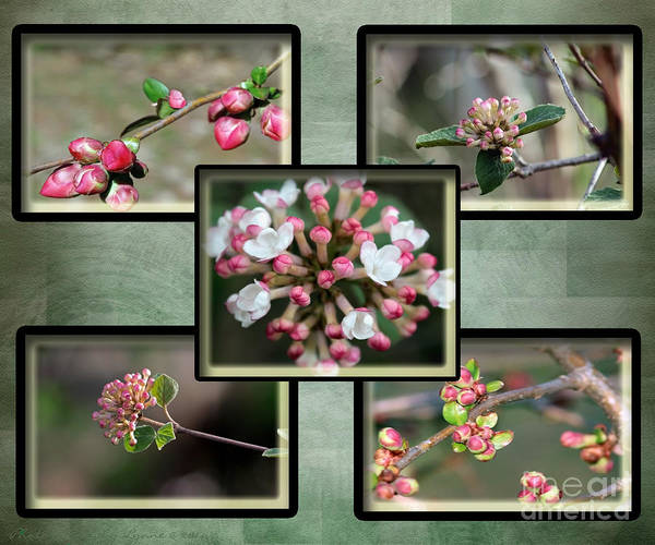 Spring Is Here - Green Art Print