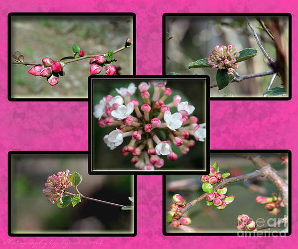 Photograph - Spring Is Here - Hot Pink by Gena Weiser