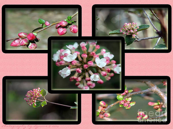 Photograph - Spring Is Here - Light Pink by Gena Weiser
