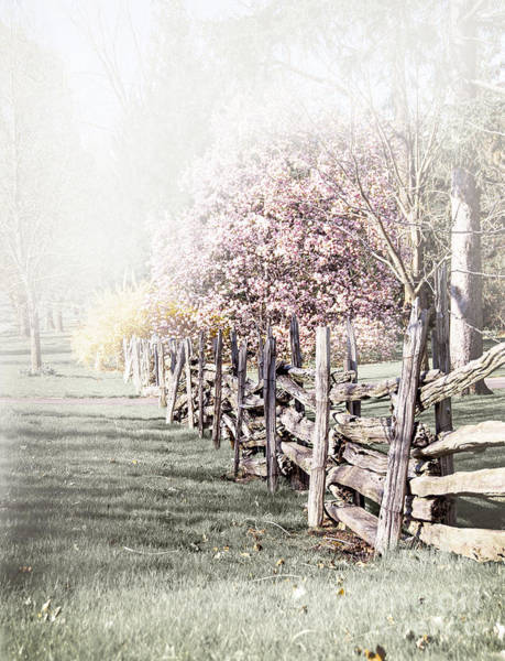 Wall Art - Photograph - Spring Landscape With Fence by Elena Elisseeva