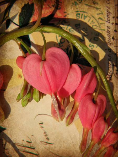 Floristry Photograph - Spring Love by Chris Berry